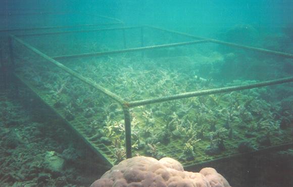 Aquafarmer